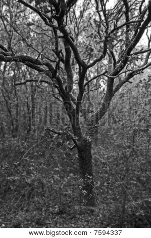 Tree Black & White