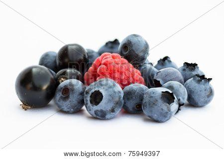 Blueberry, blackcurrant, raspberry