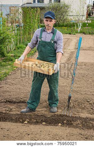 Man Began To Plant Potatoes
