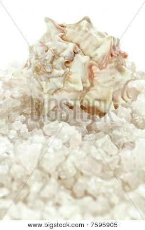 Bath Salt and Seashell