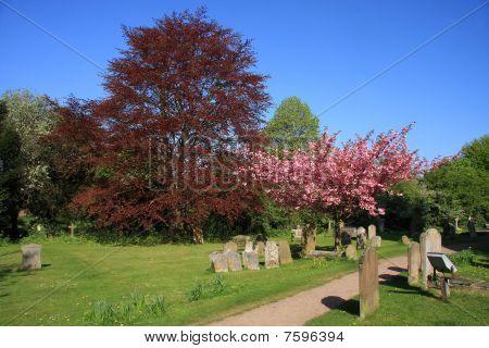 Springtime in the Churchyard