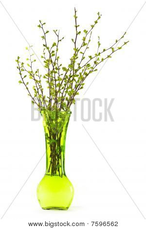 Vase Of Branches With Green Spring Leaves