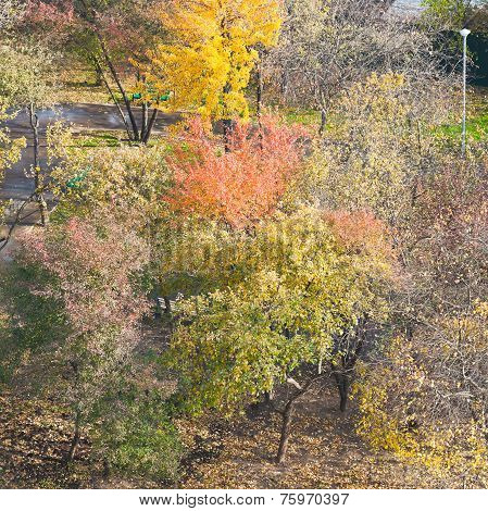 Above View Of Multicolored Trees In Urban Garden