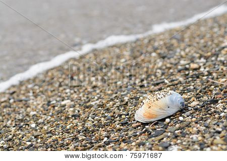 Shell on sea shore