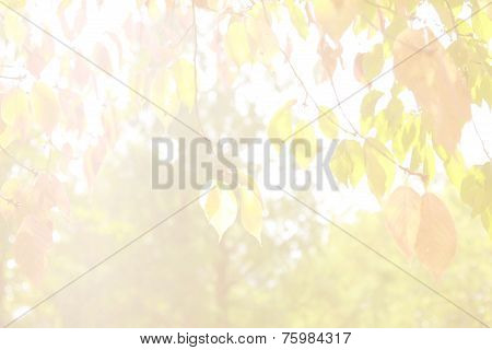 Shiny Mourning Background With Cherry Leaves