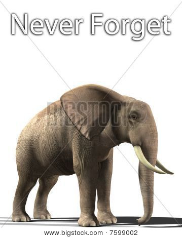 Elephant That Never Forgets