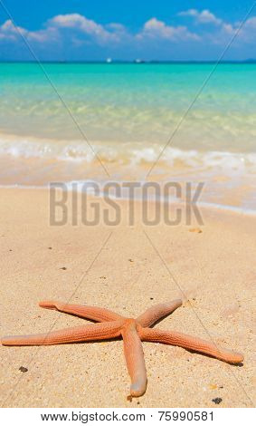 Sea Starlet Fallen Star