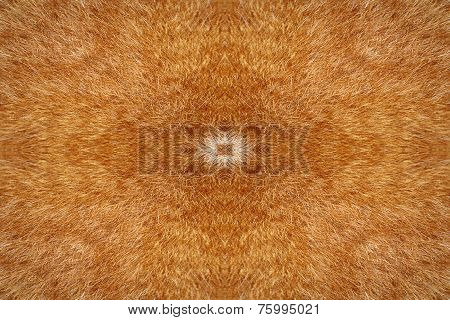 Cat Fur Kaleidoscope Background