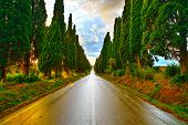 stock photo of row trees  - Bolgheri famous cypresses trees straight boulevard landscape - JPG