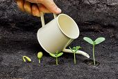 pic of nature conservation  - hand watering plants growing in sequence of seed germination on soil - JPG