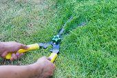 foto of grass-cutter  - Pair of scissors cut grass in the garden   - JPG