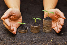 picture of sustainable development  - hands holding tress growing on coins  - JPG