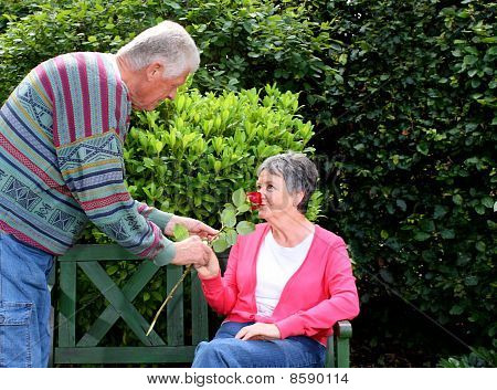 Elderly man gives red rose to woman in a park
