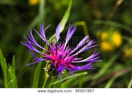 Mountain Flower-3