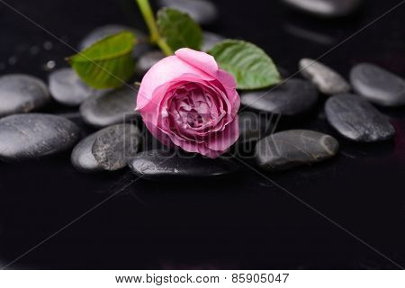 Lying down pink rose with therapy stones
