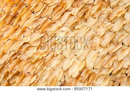 Many Dry Leaf.
