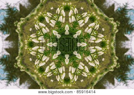 Kaleidoscopic Flower Pattern