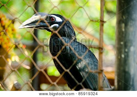 Hornbill Is Big Bird