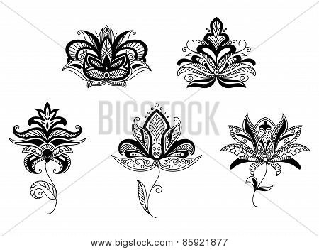 Paisley floral elements and patterns