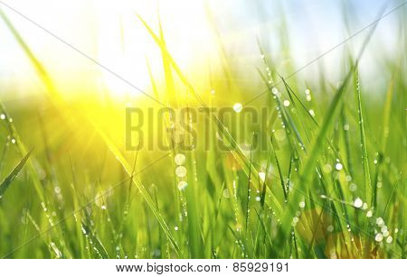 Grass. Fresh green spring grass with dew drops closeup. Sun. Soft Focus. Abstract Nature Background