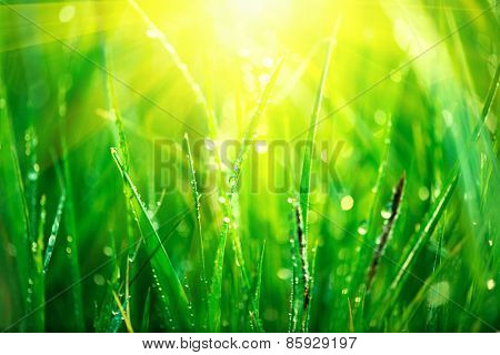 Grass. Fresh green spring grass with dew drops closeup. Sun. Soft Focus. Lawn, Abstract Nature Background