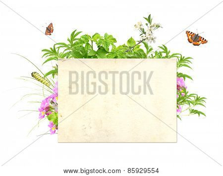 Message of nature. Isolated on white background
