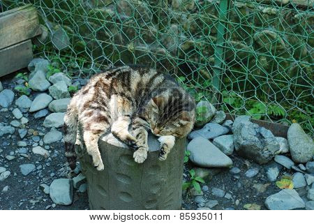 Striped Cat Chilling