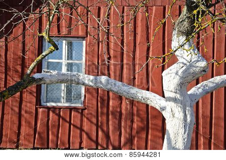 Spring Whitened Apple Tree Trunk And Farm House Wall
