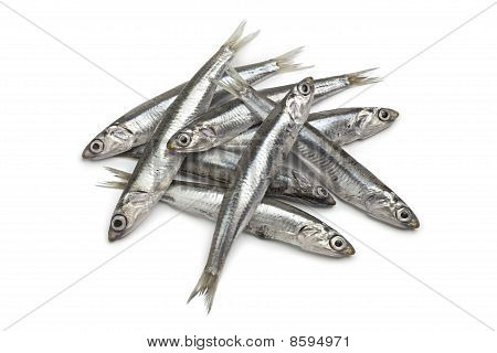 Fresh raw European anchovy