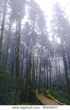 Forest and a fog