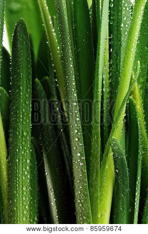 Droplets On Green Leaves