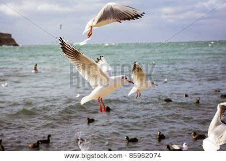The Sea Gulls