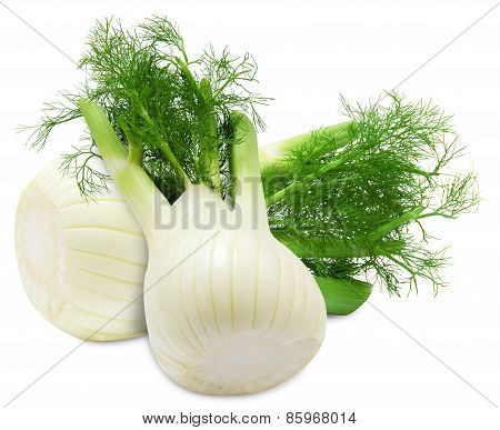 Fresh two fennel