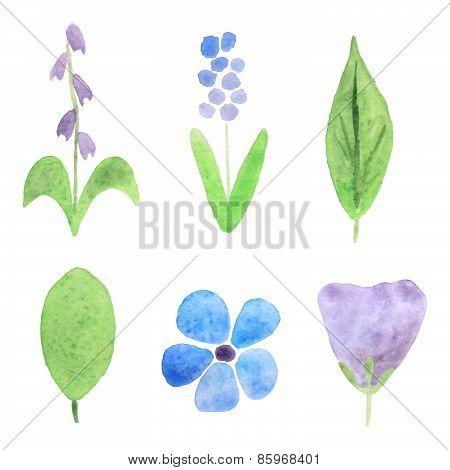 Watercolor plants