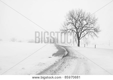 Large Tree and Fence on Country Road during Snowstorm