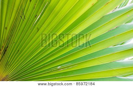 abstract straight line from palm leaf