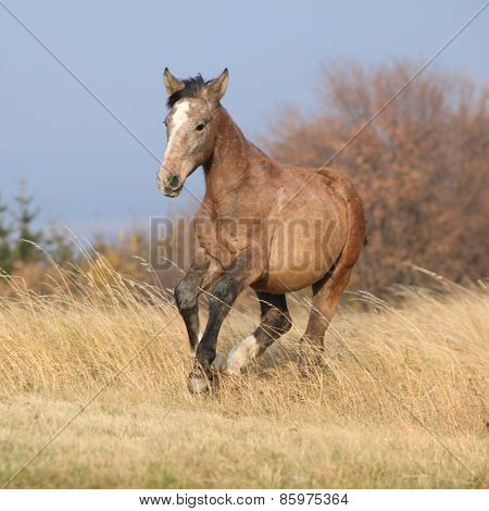 Nice Young Horse Running In Freedom