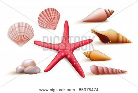 Set of Realistic Colorful Sea Shells and Stones