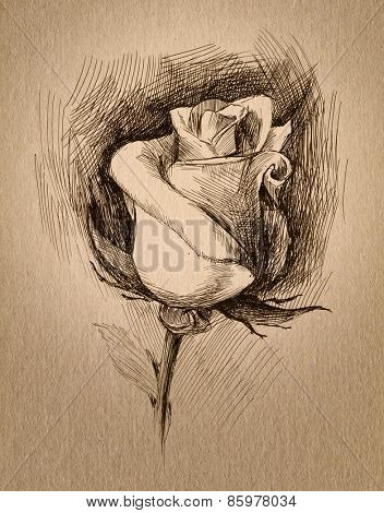 flower sketch on rough paper