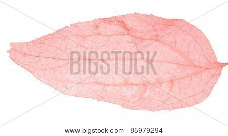light red leaf skeleton isolated on white background
