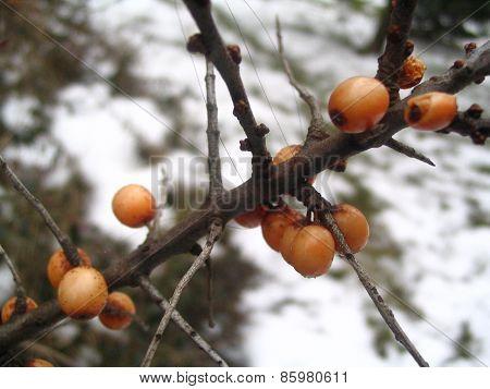 Orange balls