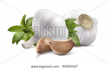 Double Garlic Bottom Knob Basil Isolated On White Background