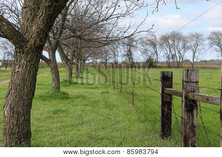 Tree Lined Fence