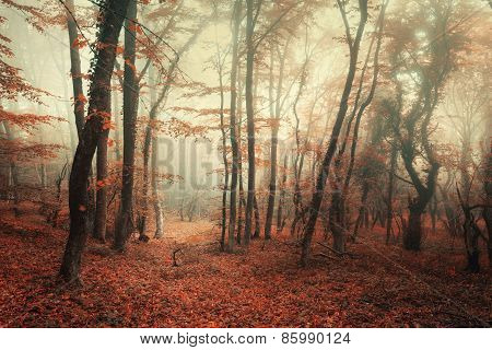 Mysterious Autumn Forest In Fog With Red And Orange Leaves