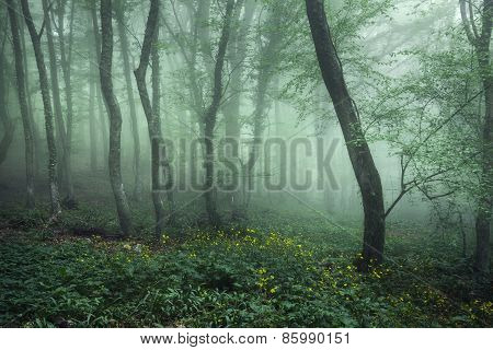 Trail Through A Mysterious Dark Forest In Fog With Green Leaves And Yellow Flowers