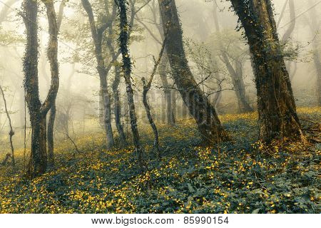 Mysterious Beautiful Forest In Fog With Green Leaves And Yellow Flowers.
