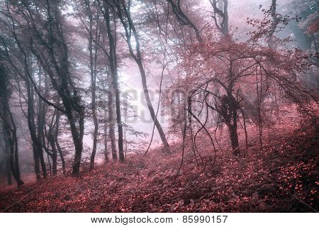 Mysterious Spring Forest In Fog With Pink Leaves And Red Flowers