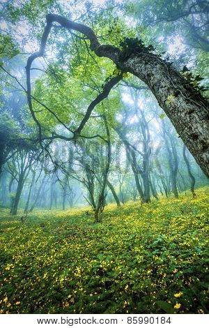 Mysterious Forest In Fog With Green Leaves, Yellow Flowers And Blue Sky