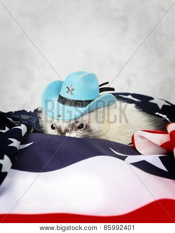 Little ferret on the USA flag background