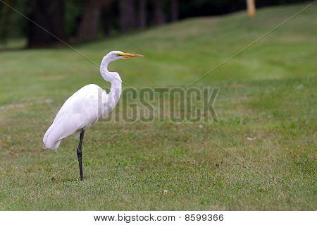 Tropical crane